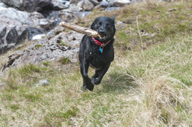 Potters Barn and Well Cottage Dog Friendly Holiday Accommodation, The Lake District, UK